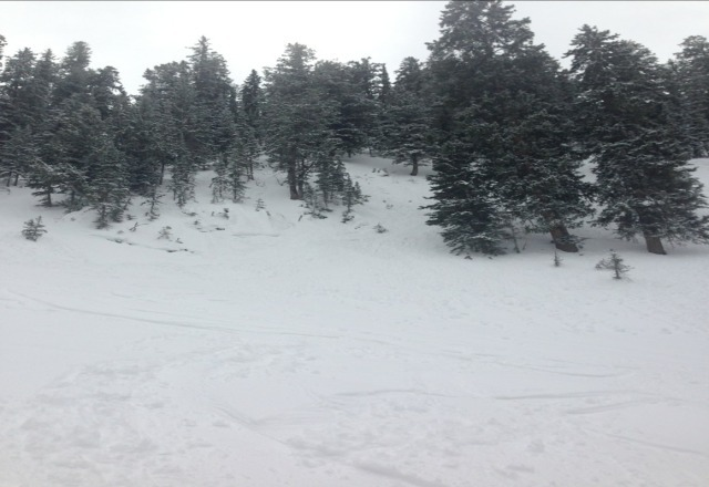"headwall forrest, 4"" of pow pow"