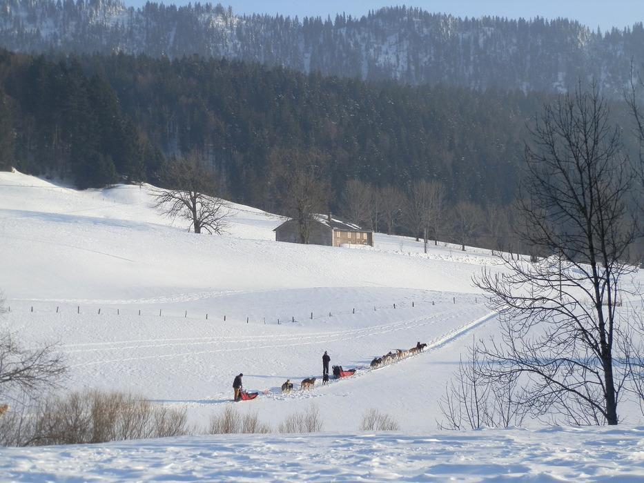 La balade en chiens de traineau, un moment de détente et de découverte à Monts Jura - © Alain Girod