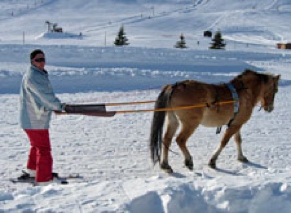 beginner skiers use horses to teach them the ways of skiing