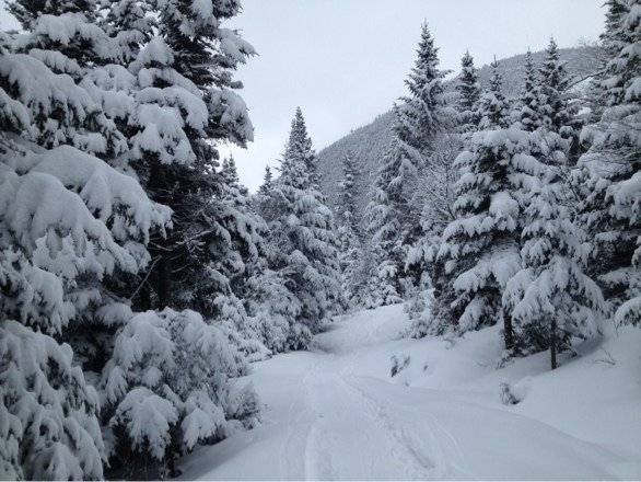 Great day today. Nice untouched powder into the woods on the way to cliff trail