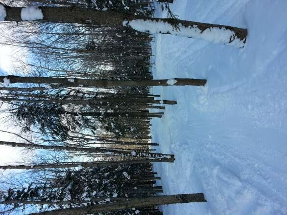 Beautiful conditions at Titus today! Lots of fresh powder in Big Al's run!!