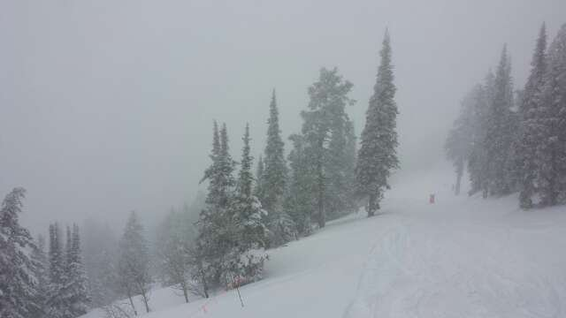 "So good in the a.m.. At least 12"" of freshies in trees above stacys. By noon it was getting heavy but still hella fun."