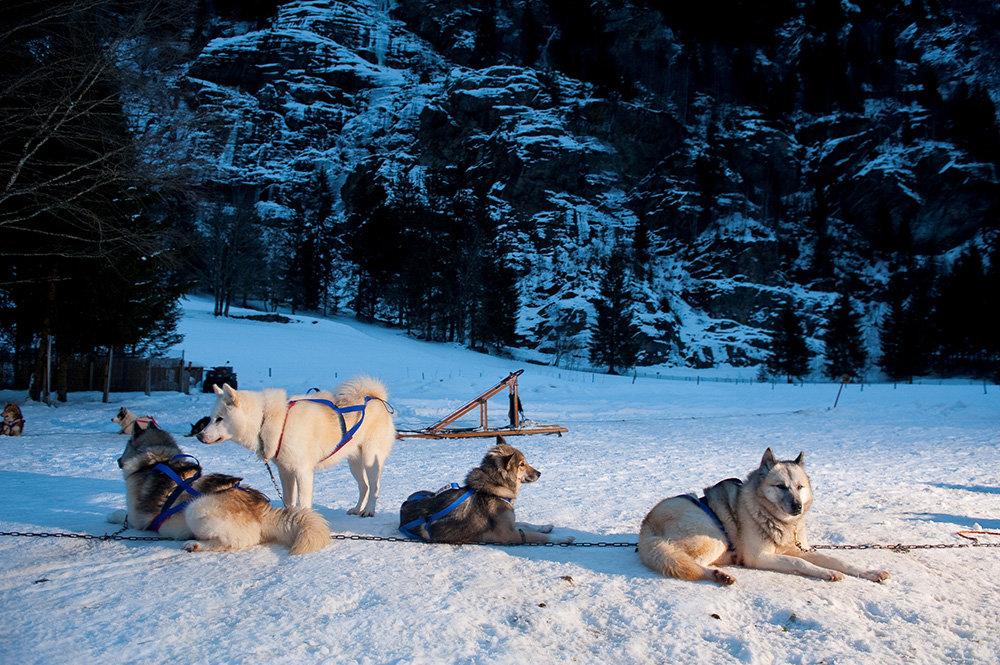 Ambiance grand-nord et découverte des attelages de chiens de traineau aux Contamines - © Zir