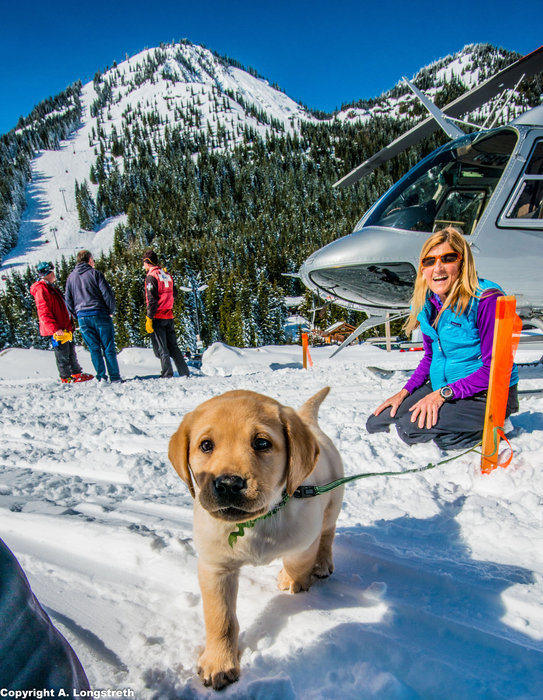 Crystal Mountain, Washington avalanche puppy in training. - © Andrew Longstreth