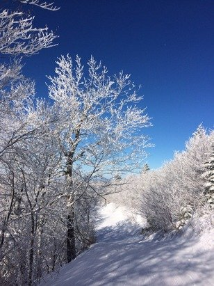 """6"""" of fresh, glades are amazing today, waist deep drifts, royal blue sky, but zero degrees"""