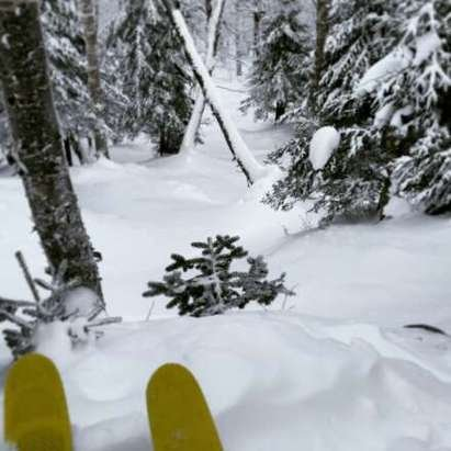 Woods are skiing fantastically. On piste pretty wind scoured. cold as hell this weekend.