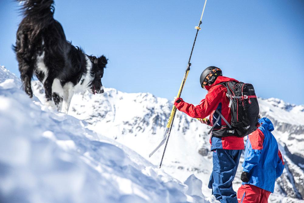 Ein Hund schaute als tierischer Begleiter bei der Verschüttetensuche vorbei - © Christoph Jorda | www.christophjorda.com