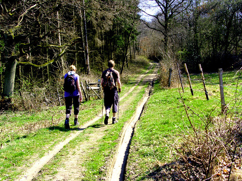 Durch Wald und Felder auf dem Rheinsteig - © bergleben.de