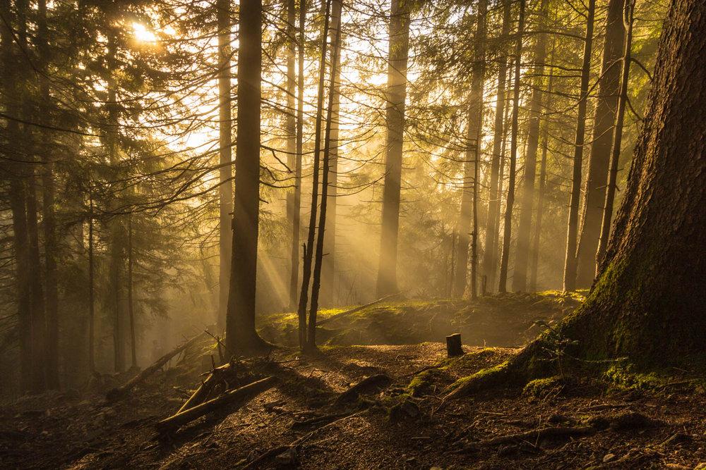 Die Inversionswetterlage bietet großartige Lichtspiele - © Frieda Knorke