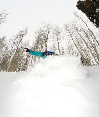 Powder Mountain - Gotta luv the Aspens! Cold weather has kept the pow epic at good 'ol #powmow  - ©FUZZ
