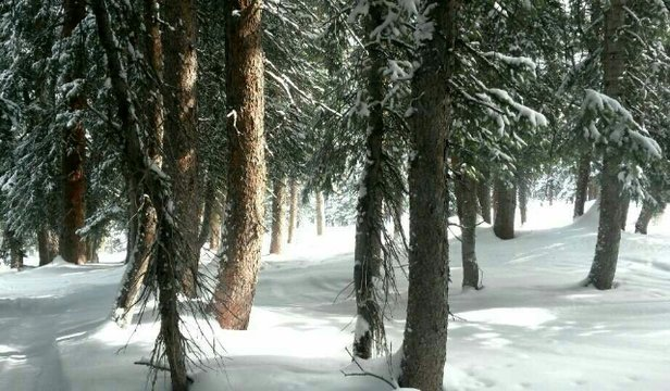 Brighton Resort - Pretty decent snow and plenty of powder in the trees off Milly Lift.  - ©brycedunhamzemberi