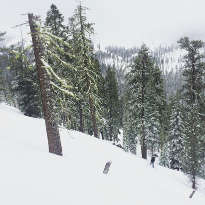 Sierra-at-Tahoe - Fresh tracks all day. - © Matthew T. McGonigle's i