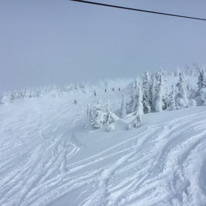 Mt. Bachelor - So much powder today, northwest tree runs and bowls were epic!  - © rgipson