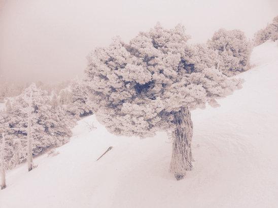 Bear Mountain - 2/1/16 - © iPhone