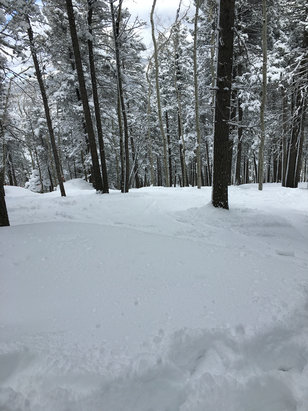 "Sipapu Ski Resort - Great day today! Fresh lines in the trees, soft deep snow! 24"" last 3 days!  - © michael's iPhone"