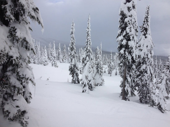 Big White - Great Day at Big White. Fresh powder 11cm overnight - © Pepper