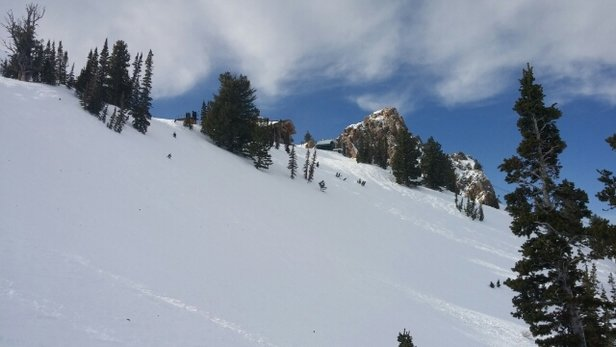 Snowbasin - 8-10 inches on Thurs. Still powder to be found...above Needles Lift - ©Go Gators