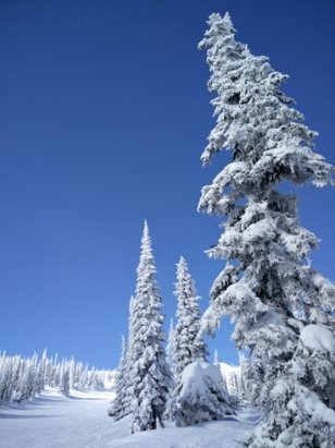 Big White - Great conditions today  - © chasdarrow
