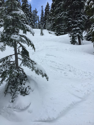 Mt. Hood Meadows - Great snow today in heather Canyon 