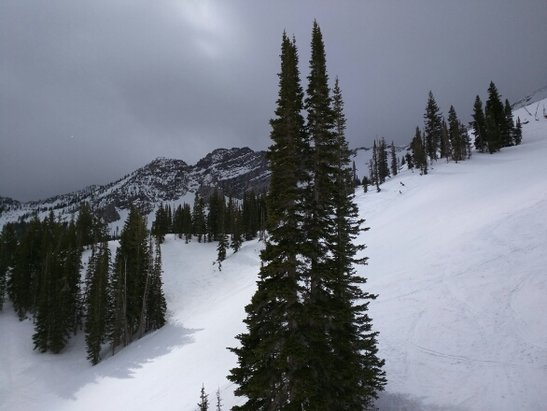 Alta Ski Area - it was snowing at the summit but raining at the base. the snow that did fall was sticky and would instantly slow you down. this is expected in spring!! - © dmclaug2