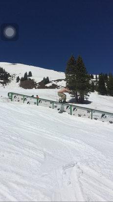 Arapahoe Basin Ski Area - 63 degree Shirtless park runs! June 5th  - ©anonymous user