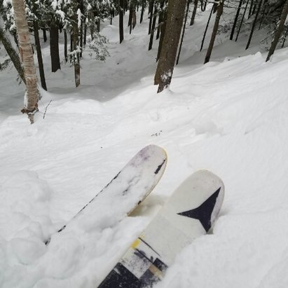Loon Mountain - great snow today, even some powder in the trees!! - © anonymous