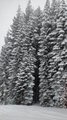 Mt. Shasta Ski Park - Eleven fresh inches during the day today, groomers should be busy tonight. - © anonymous