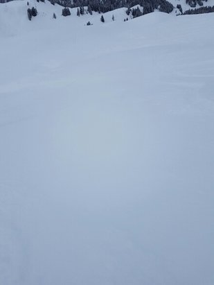 Hoch-Ybrig - Some nice powder bit, hardly any bases though  - ©anonymous