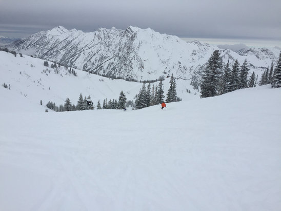 Alta Ski Area - Great powder day today!!!! - © Andrew
