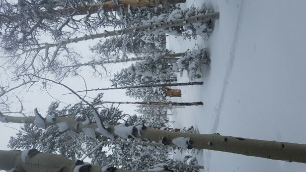 Lee Canyon - It's knee deep fresh powder!  2 to 3 ft in last 2 days - © Powder Houndz
