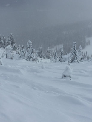 Big White - Fresh pow, easy to find good lines all day on the Ridge. Especially in the trees - © Greg D