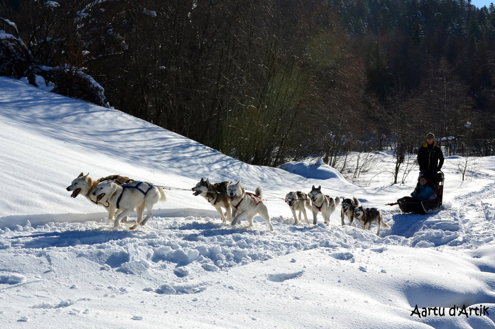 Balade en chiens de traineaux sur les sentiers enneigés du plateau de Savoie Grand Revard - © Station de Savoie Grand Revard