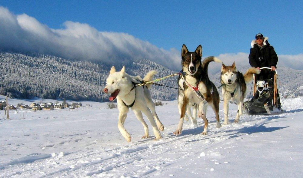 Escapade et dépaysement le temps d'une balade en chiens de traineaux sur le plateau du Vercors - © Station Autrans-Méaudre en Vercors