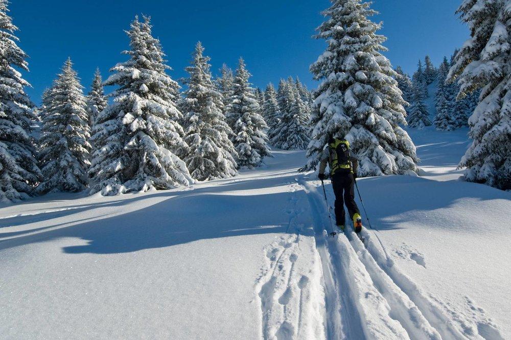 Escapade dans les forêts Vosgiennes, à proximité de Rouge Gazon