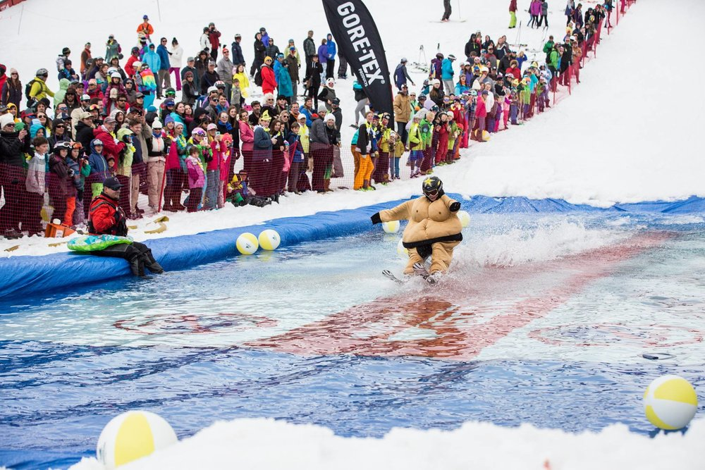 Sumo pond skimming. - © Taylor Ahearn/CBMR