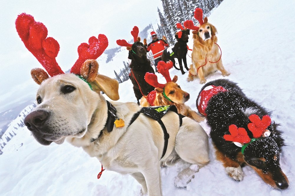 We heard there'd be milk-bones and cookies involved... - © Crested Butte Mountain Resort