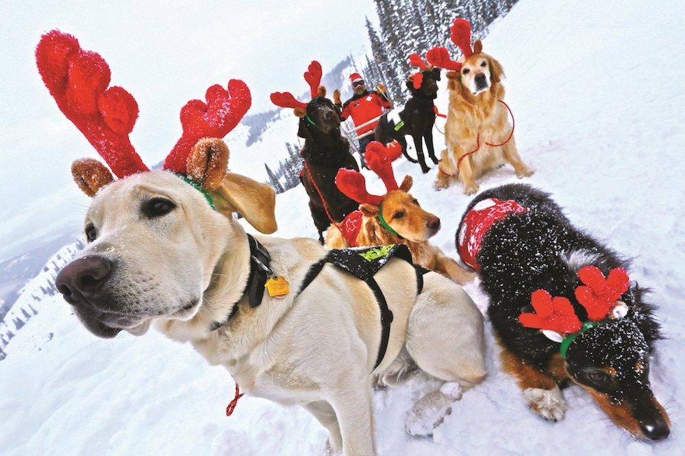 Vianočne slnečné počasie na horách isto poteší aj tieto vyfešákované psy. A my vám želáme pekné Vianoce! - © Crested Butte Mountain Resort