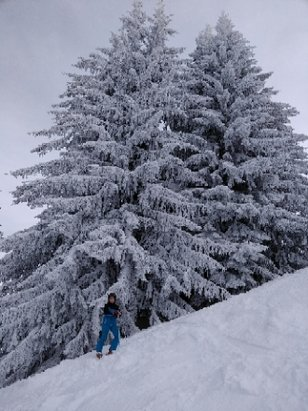 Morillon - Another great powder day in Morillon !  - © anonymous