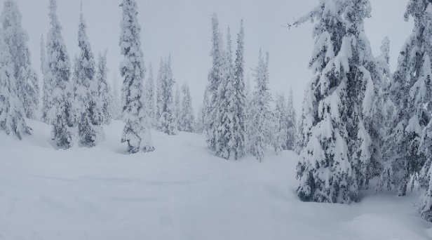 Big White - So deep. Just spent a week there and found deep, fresh tracks daily. Poor visibility most of the time but the snow was epic. Stick to the trees.  - © anonymous