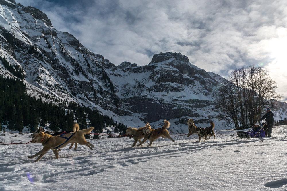 Balade en chiens de traineaux sur les plateaux enneigées du Mont Saxonnex - © Office de Tourisme Intercommunal Cluses Arve & montagnes