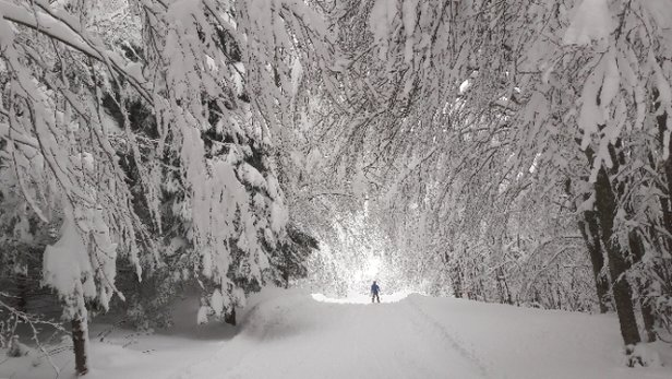 Schia Monte Caio - 4/02/18 giornata bellissima, a parte qualche impianto che ha tardato a partire. neve anche troppa - © Anonimo