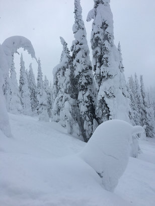 Whitefish Mountain Resort - Absolutely amazing light fluffy powder!  - © iPhone