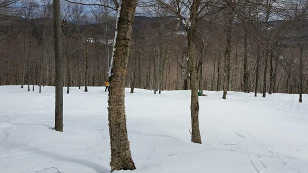 Mount Snow - Mt Snow was amazing today. Rode the Glades all day! get there!  - © anonymous