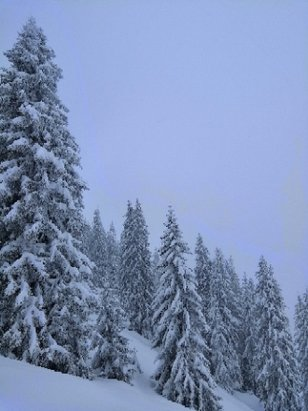 Westendorf - SkiWelt - Another 30cm of powder on top ofbthe 20cm yesterday and still snowing heavily. Fantastic conditions on and off piste (but cold!)!  - © anonymous