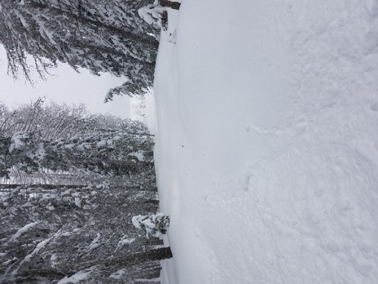 49 Degrees North - Best powder of the year Feb 12 - © anonymous