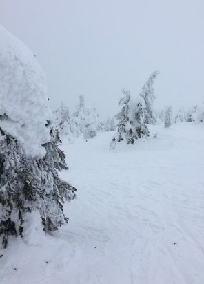 Big White - Visibility very low at top but some areas with decent powder. - © ABC