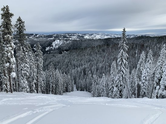 Bluewood - Groomed snow, but fresh found through the trees. - © Anonymous