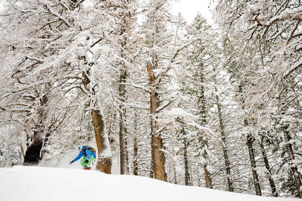 Wyatt Caldwell coming through the trees at Sun Valley. - ©Tal Roberts