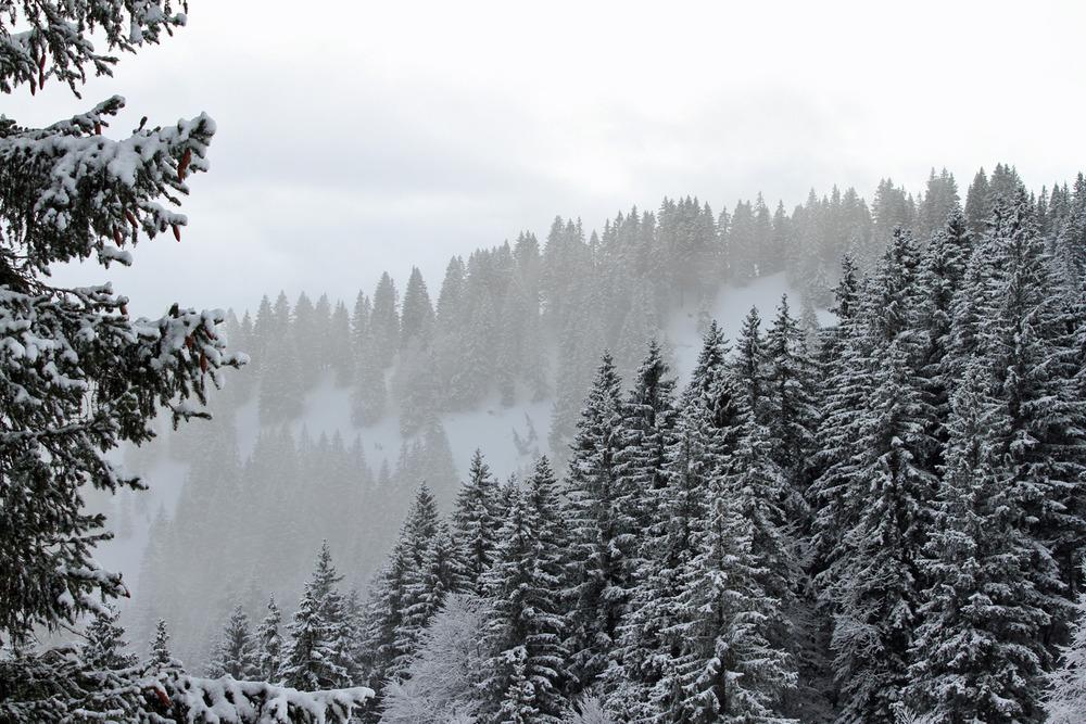 Winterwelt im Allgäu - © Skiinfo / S. Lindemeyer