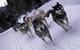 Dog sledders at Breckenridge, CO.